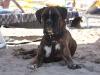 amici-in-spiaggia11