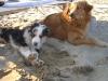 amici-in-spiaggia25